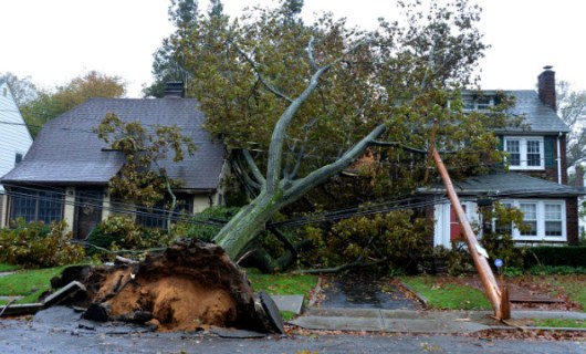 Downed Trees and Power Lines Caused by Hurricane Sandy