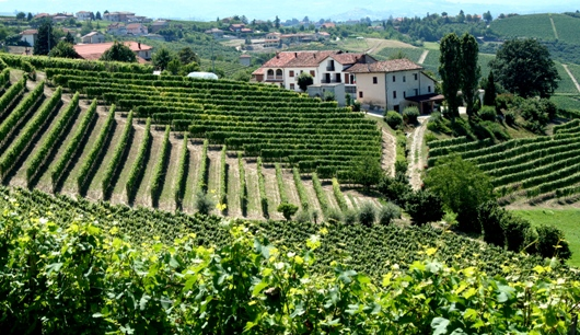 Piemonte Italy Vinyard and Village